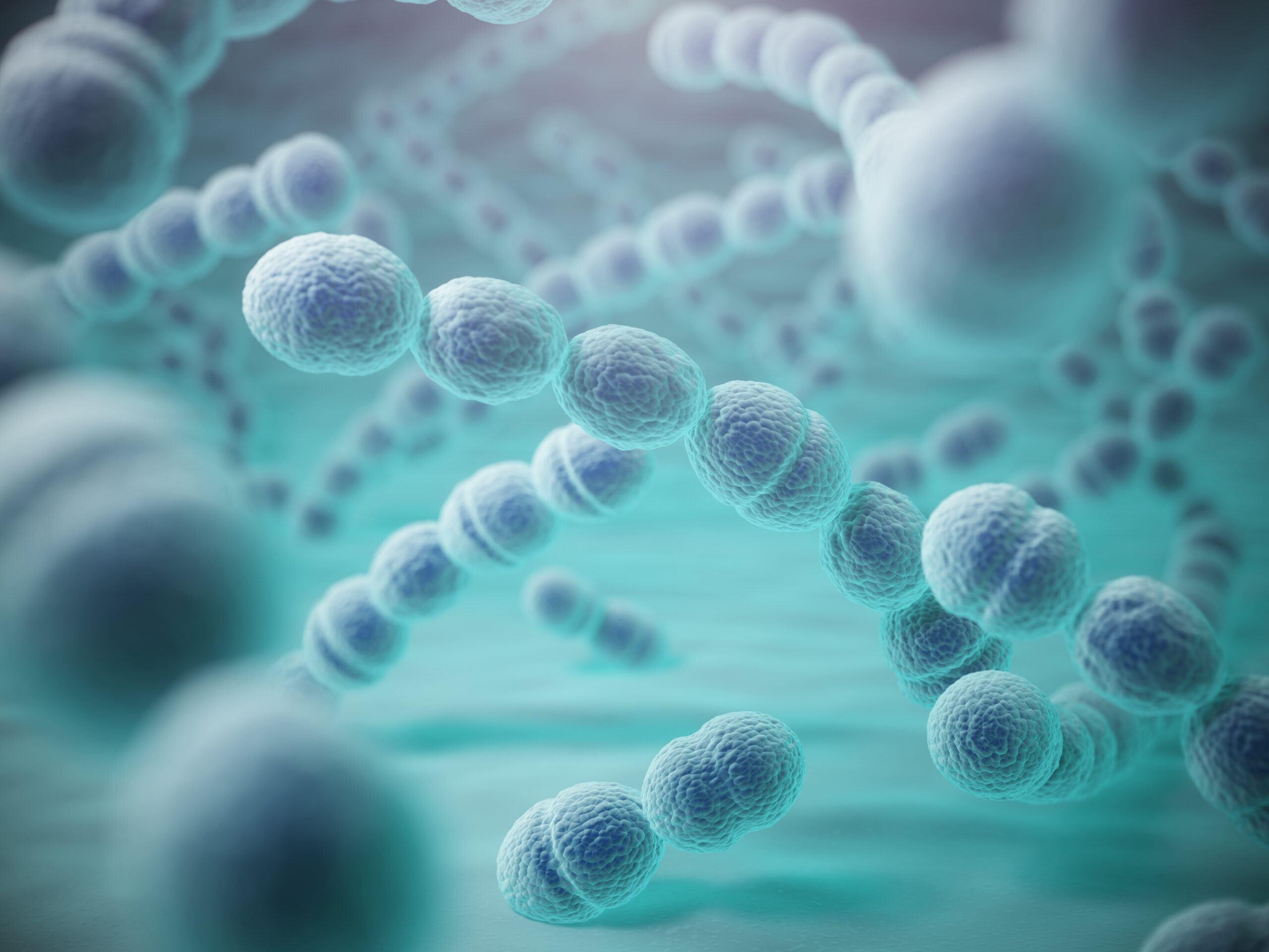Streptococcus salivarius K12
